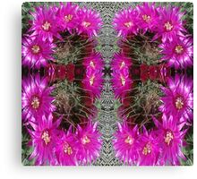 Butterfly of Circled Cactus Canvas Print