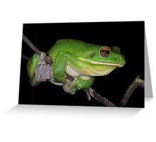 White-lipped Tree Frog Profile Greeting Card