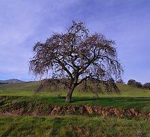 Los Vaqueros Watershed  •  Livermore, California by Richard  Leon