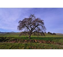 Los Vaqueros Watershed  •  Livermore, California Photographic Print