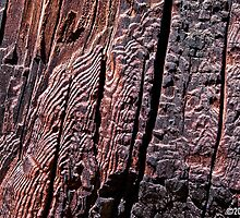 """General Noble Tree - """"Chicago Stump"""" Detail 1 by Alex Preiss"""