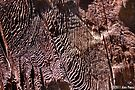 """General Noble Tree - """"Chicago Stump"""" Detail 2 by Alex Preiss"""