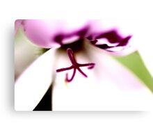 Purple Macro Flower Canvas Print