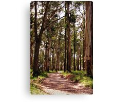 Dandenong Ranges National Park - Mountain Ash Canvas Print