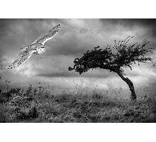 The arrival of hope Photographic Print
