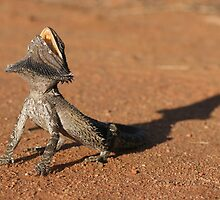 Bearded Dragon by Ken Griffiths