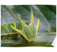 Tailed Emperor Caterpillar Poster