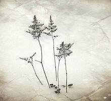 Little Trees © by Dawn M. Becker