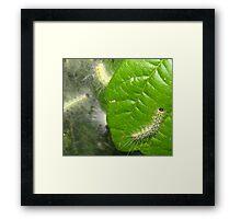 Tent Caterpillar  Framed Print