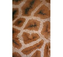 Natural Abstracts - Giraffe Hide Photographic Print