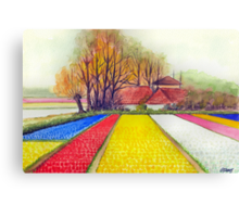 BULB FIELDS AND A DUTCH FARM - AQUAREL Canvas Print