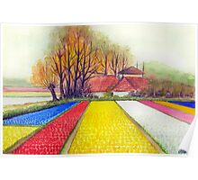 BULB FIELDS AND A DUTCH FARM - AQUAREL Poster