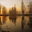 Morning Reflections by ienemien