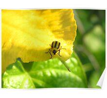 Yellow Squash Bug Posing Poster