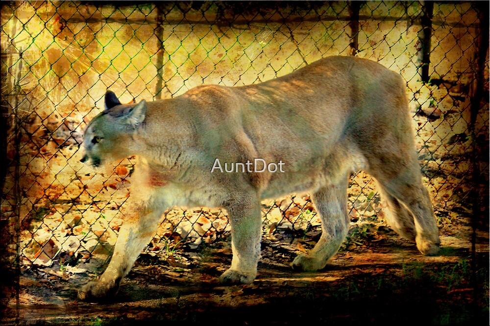 Florida Panther by AuntDot