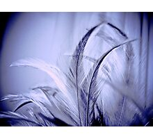 Her feathers and the moonlight: Sold, Got 2 Featured Works Photographic Print