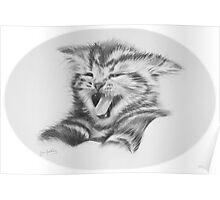 Sour puss. Kitten Poster