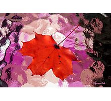 Autumn Leaf on a Wet Table Photographic Print