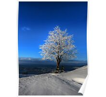 Tree With a View Poster