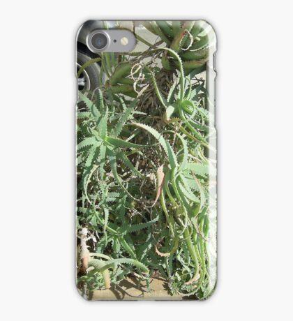 Aloe, Rustenburg, Gauteng, South Africa iPhone Case/Skin