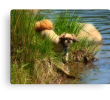 Biddy beside the shore  Canvas Print