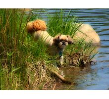 Biddy beside the shore  Photographic Print