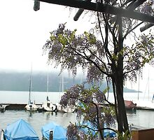 Lake Lucerne Draped in Lavender Wisteria by nadinecreates