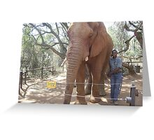 Young Elephant Bull, Gauteng, South Africa Greeting Card