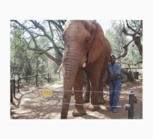 Young Elephant Bull, Gauteng, South Africa One Piece - Long Sleeve