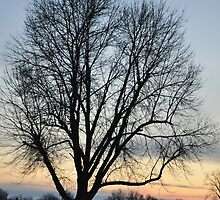 Bare winter tree with pastel sunset by mltrue