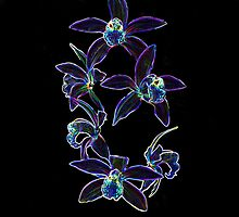 Fantasy Orchids by Dorothy Thomson