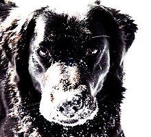 Snow Fun by vanessb1993