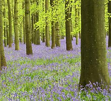 Bluebell Wood by Lin-Ann Anantharachagan