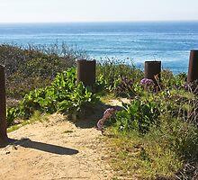 Del Mar Ocean View  by heatherfriedman