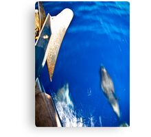 Dolphins Off Starboard Bow Canvas Print