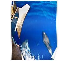 Dolphins Off Starboard Bow Poster