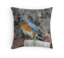 Eastern male Bluebird Throw Pillow