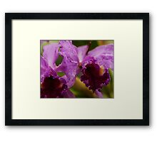 """""""Two Precious"""" - Conservatory Orchids Framed Print"""