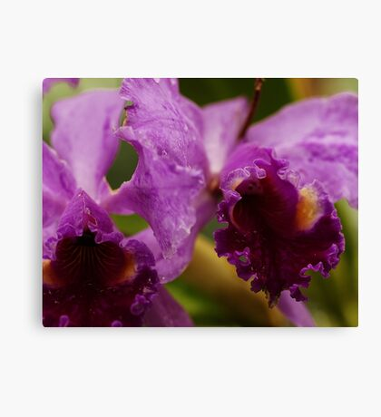 """""""Two Precious"""" - Conservatory Orchids Canvas Print"""
