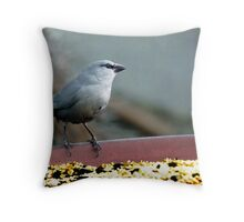 Lavender Waxbill Throw Pillow