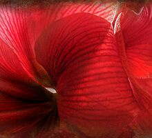 Lost in the Amaryllis by Kay Kempton Raade