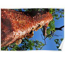 under a mahogany tree Poster
