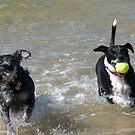 VALLA BEACH DOGS by Ekascam