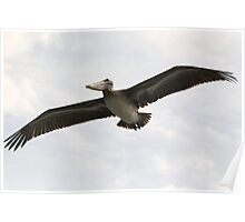 Wing Span Poster