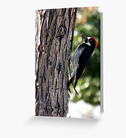 Acorn Woodpecker ~ Male Greeting Card
