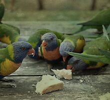 Rainbow Lorikeets by garts