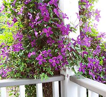 Purple Invasion by Carol E. Davis