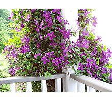 Purple Invasion Photographic Print