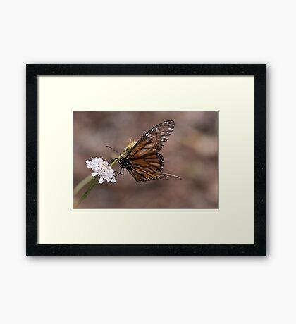 Butterflies & Dragons (minus the Dragons) Framed Print