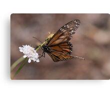 Butterflies & Dragons (minus the Dragons) Canvas Print